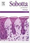 Sobotta Lernkarten Histologie