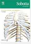 Sobotta Lernkarten Knochen, Bänder und Gelenke