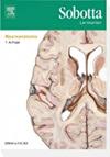 Sobotta, Lernkarten Neuroanatomie